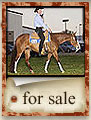 Click to view our horses for sale